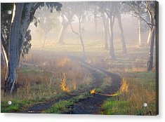 Into The Mist Acrylic Print by Mike  Dawson