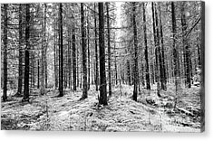 Into The Monochrome Woods Acrylic Print