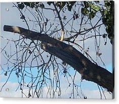 Tree Leaves Into The Sky Acrylic Print
