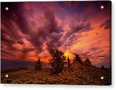 Into The Storm Acrylic Print by Dan Holmes