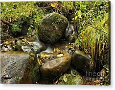 Into The Stream 4 Acrylic Print