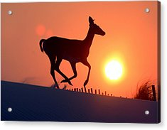 Into The Sunset Acrylic Print by Scott Mahon