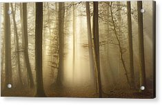 Into The Trees Acrylic Print by Norbert Maier