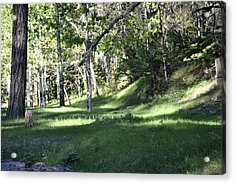 Into The Woods Acrylic Print by Jon Rossiter
