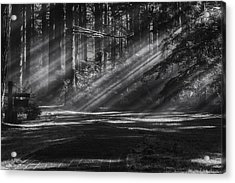 Into The Woods Acrylic Print by Mark Kiver