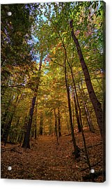 Into Vaughan Woods Acrylic Print by Rick Berk