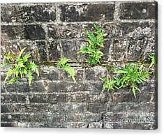 Acrylic Print featuring the photograph Intrepid Ferns by Kim Nelson