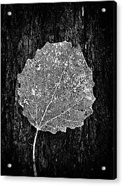 Intricate  Acrylic Print by Karen Stahlros