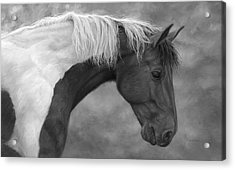 Intrigued - Black And White Acrylic Print