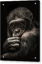 Introvert Acrylic Print by Paul Neville