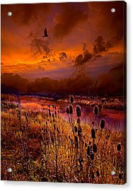 Intuition Acrylic Print by Phil Koch