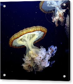 Invasion Of The Japanese Sea Nettles Acrylic Print