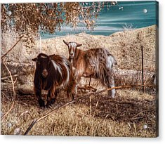 Acrylic Print featuring the photograph Invisible Lives by Chriss Pagani