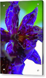 Ionized Acrylic Print by Renee Holder