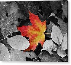 Iowa Autum Acrylic Print by Julie King