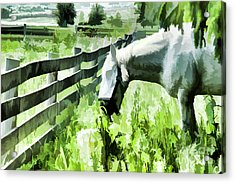 Iowa Farm Pasture And White Horse Acrylic Print by Wilma Birdwell