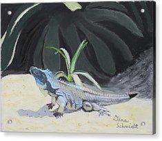 Iquana Lizard At Sarasota Jungle Acrylic Print