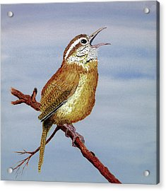 Acrylic Print featuring the painting Irate Wren by Thom Glace