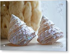 Acrylic Print featuring the photograph Iridescent by Aiolos Greek Collections