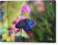 Iridescent Acrylic Print