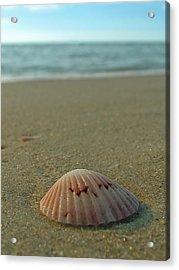 Iridescent Seashell Acrylic Print by Juergen Roth