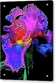 Acrylic Print featuring the photograph Iris 3 by Pamela Cooper