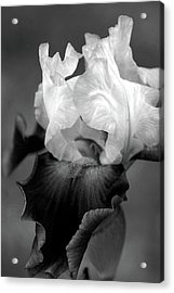 Iris 6621 H_5 Acrylic Print