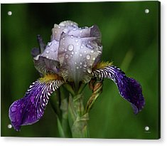 Iris After The Rain 1409 H_2 Acrylic Print