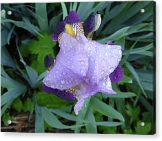 Iris After The Rain IIi Acrylic Print