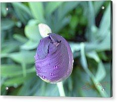Iris After The Rain V Acrylic Print