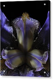 Iris Aglow Acrylic Print by Mark Fuller