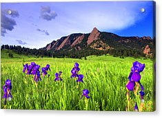 Iris And Flatirons Acrylic Print by Scott Mahon