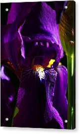 Iris Acrylic Print by Anthony Jones