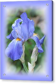Iris Beauty Acrylic Print
