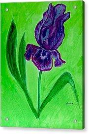 Iris Bloom Acrylic Print by Marsha Heiken