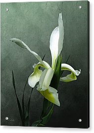 Iris Celebration Acrylic Print