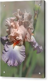 Iris Celebration Song 1. The Beauty Of Irises Acrylic Print by Jenny Rainbow