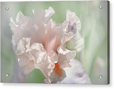 Iris Celebration Song. Tender. The Beauty Of Irises Acrylic Print by Jenny Rainbow