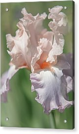 Iris Celebration Song. The Beauty Of Irises Acrylic Print by Jenny Rainbow