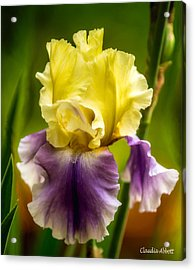Acrylic Print featuring the photograph Iris by Claudia Abbott