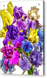 Acrylic Print featuring the photograph Iris Collection by CAbbottPhotography