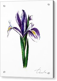 Iris Acrylic Print by Danuta Bennett