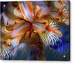 Acrylic Print featuring the mixed media Iris Dream by Lynda Lehmann
