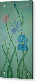 Iris Dreams Acrylic Print by Alanna Hug-McAnnally