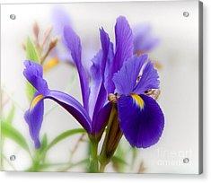 Spring Iris Acrylic Print by Elaine Manley