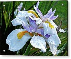 Iris Enjoying The Sunshine Acrylic Print by Kaye Menner