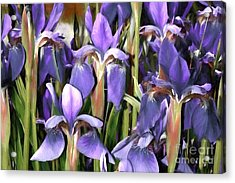Acrylic Print featuring the photograph Iris Fantasy by Benanne Stiens