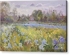 Iris Field In The Evening Light Acrylic Print by Timothy Easton
