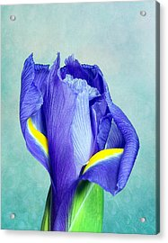Iris Flower Of Faith And Hope Acrylic Print by Tom Mc Nemar
