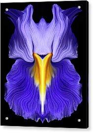 Iris Acrylic Print by Gary Zuercher